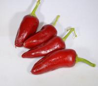 Bermuda Pepper