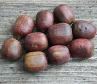 Actinidia arguta x melandra - Red Hardy Kiwi