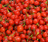 Wiri Wiri Pepper