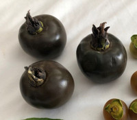 Diospyros californica - Wild Black Sapote