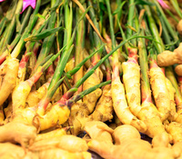 Zingiber officinale - Hawaiian Yellow Ginger