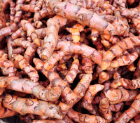 Curcuma longa - Hawaiian Red Turmeric