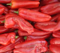 Capsicum annuum - Sonora Pepper