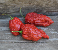 Capsicum chinense - 7 Pot Cinder Pepper