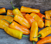 Capsicum chinense - Datil Orange Pepper