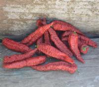 Capsicum chinense - Leviathan Pepper
