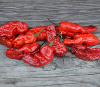 Black Panther Pepper