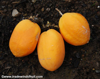 Passiflora laurifolia - Water Lemon