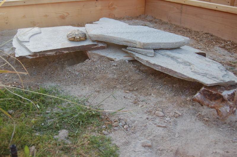 Pancake tortoise enclosure