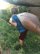 Bulk Bag Coconut Coir (Loose Form)