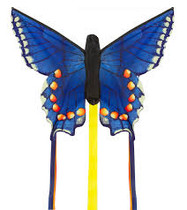 HQ Butterfly Swallowtail Blue Regular