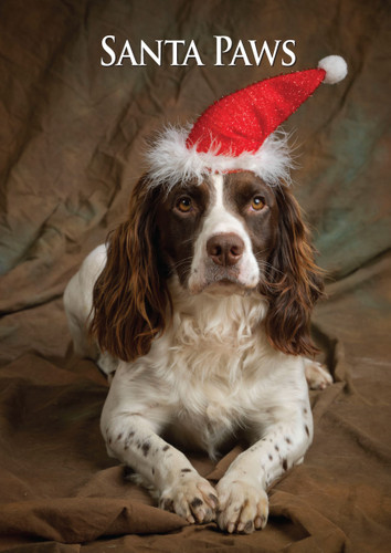 Springer Spaniel Santa Paws Christmas Card