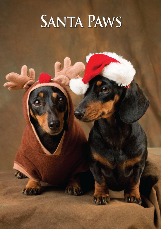 Miniature Dachshund Pair Santa Paws Greeting Card CSP from ...