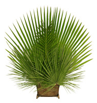"Create a beautiful altar arrangment!!  Clean and convenient to arrange, each bag of Fan and Date Altar Decor includes 4 unstripped palm fronds, 24"" to 36"" in height. The smaller Mediterranean Fan measures 16"" to 18"" high and comes 8 to a bag — perfect for any type of arrangement! Includes the following (will make two of the shown arrangement): 1 bag of Fan Palm; 1 bag of Date Palm and 1 Bag of Mediterranean Palm. Note:  vase, chicken wire, floral foam not included this combination will make 2 arrangments."