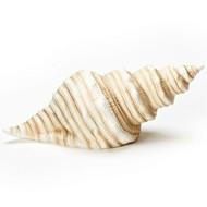 "Fishers of Men.....4.25""H tan Seashell LED light. Porcelain"