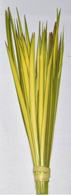 """13""""-20"""" Short Double Palm. Bundles of 100 Short Double Palm Strips from Fan Palms. Individual Short Palm Strips have been stripped and are ready to hand out. Range in length from 13"""" to 20"""". All Palm Strips are Packaged in 100 strips to the bundle. Bulk pricing available. Will show up when you check out."""