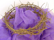 "This authentic Crown of Thorns is crafted in Israel ~ A constant reminder of the promises Christ made to Christians around the world. The small Crown of Thorns measures approximately 8""- 10"" in diameter. The larger crown is approx 12-13"". The crown of thorns is a symbolic reminder of the suffering Jesus endured to redeem his people. Use as a centerpiece for  your home, for a Passion Play, a wall decoration or place atop a wooden olive cross, draped with a purple cloth for the ultimate statement. Wrapped in purple gift tissue and gift boxed with message scroll detailing the origins of the crown of thorns. This replica of the crown of thorns has been known to the region of many years. Its scientific name is Euphorbia Milli. This thick stemmed plant grows amidst the desert of Jericho and by the Dead Sea, 30 Miles from Jerusalem. This Beautiful ornamental plant, which has dense thorns, is said to have been used by Roman Legionaries to mock Christ at his Crucifixion."
