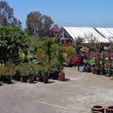 J'S Plant Sales Nursery Outlet