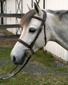 Venice Pony Bridle