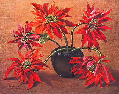 Tretchikoff Red Poinsettia