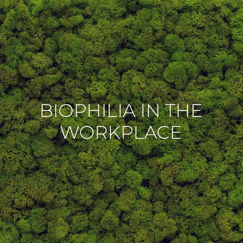 Biophilia In The Workplace Blog