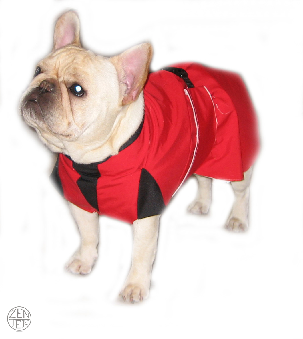frenchie-cutout.jpg