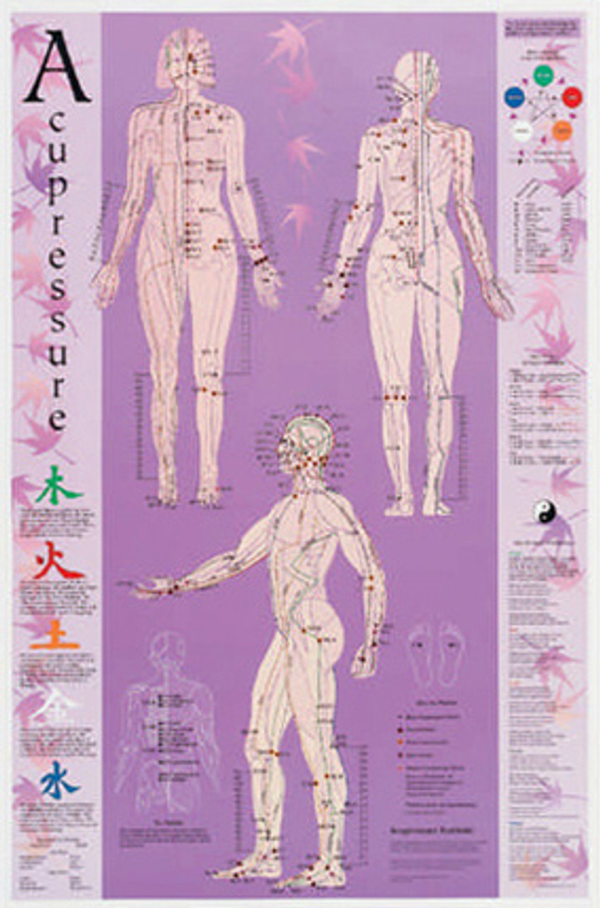 Acupressure Wall Poster Purple Large - bodytools.com