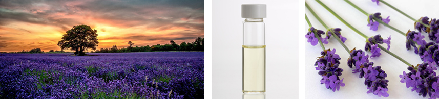 Lavender Flower Extract Natural Skin Care Products | Rosemira