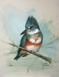 Female Belted Kingfisher (Download Only)