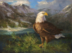 DVD4033  Eagle Watch- Wildlife Education Series