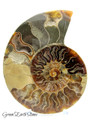 Ammonite Fossil Pair XL Premium AMM23