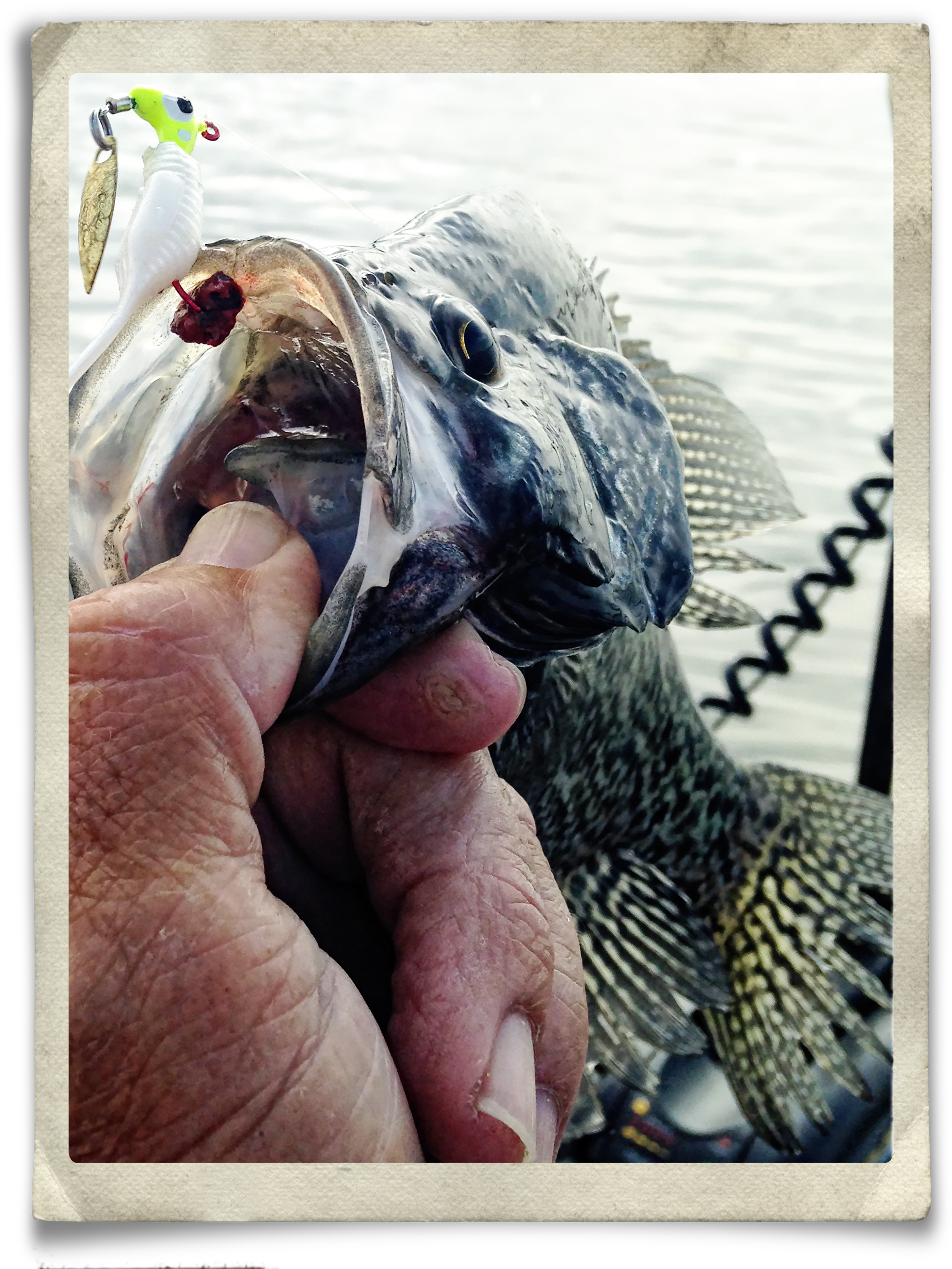 crappie-red-tipped-ss-pellet.jpg