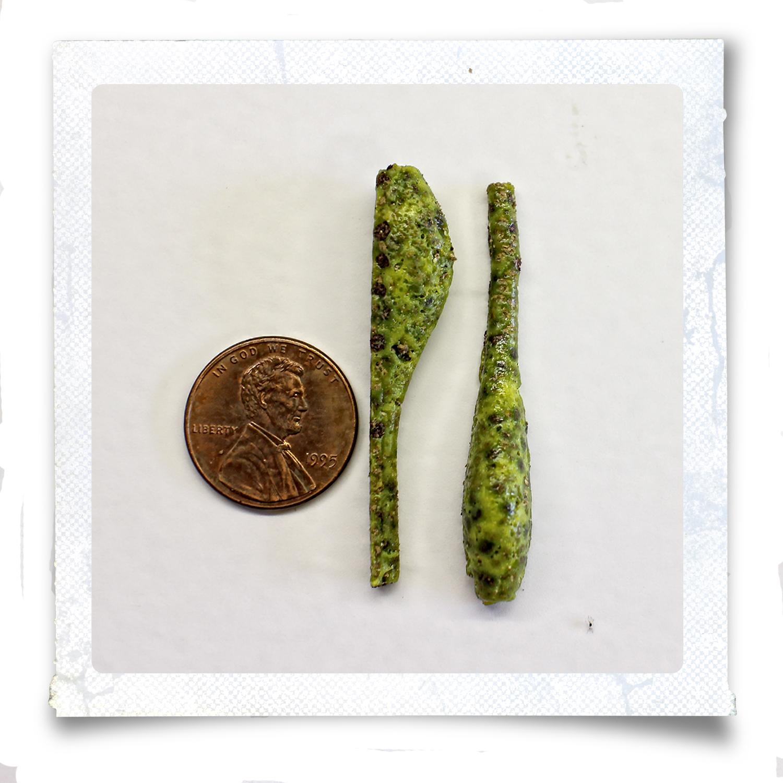 green-shad-5-x-5.jpg