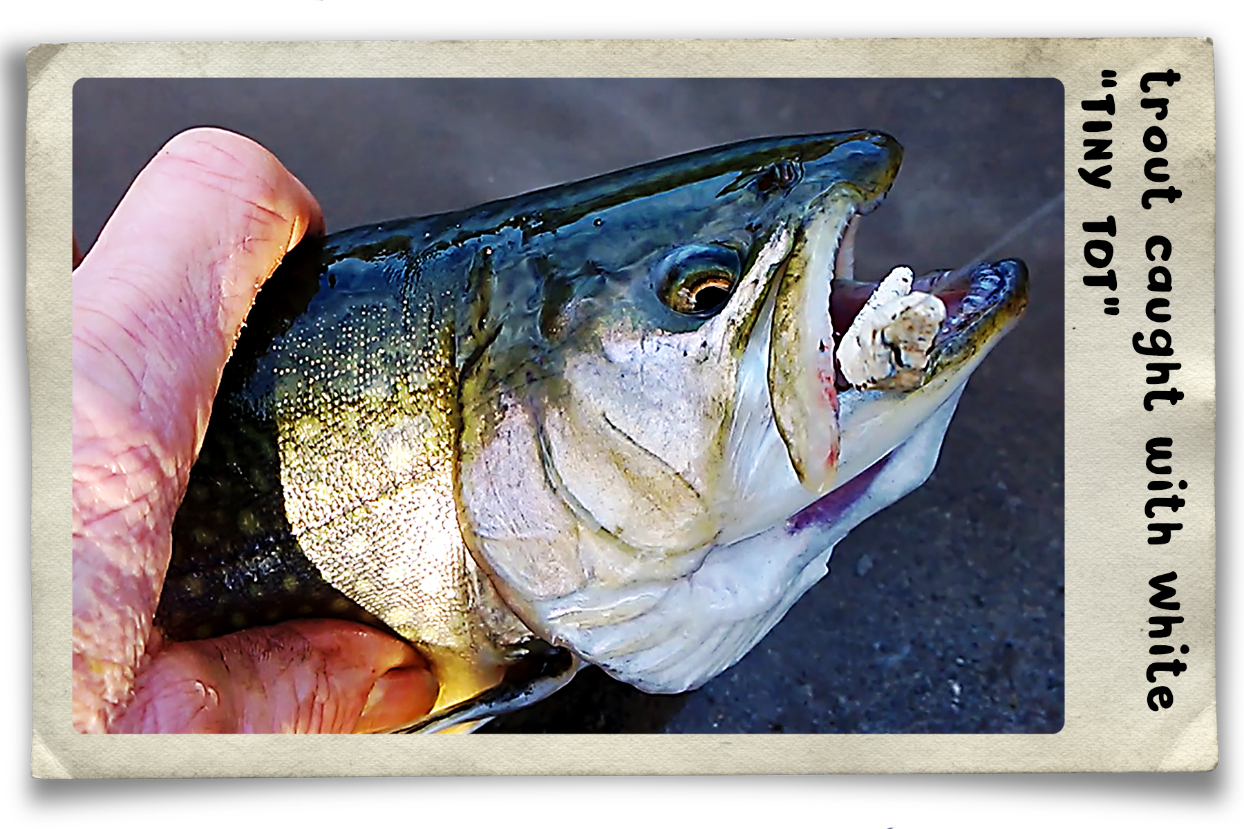 trout-white-tiny-tot-frame.jpg
