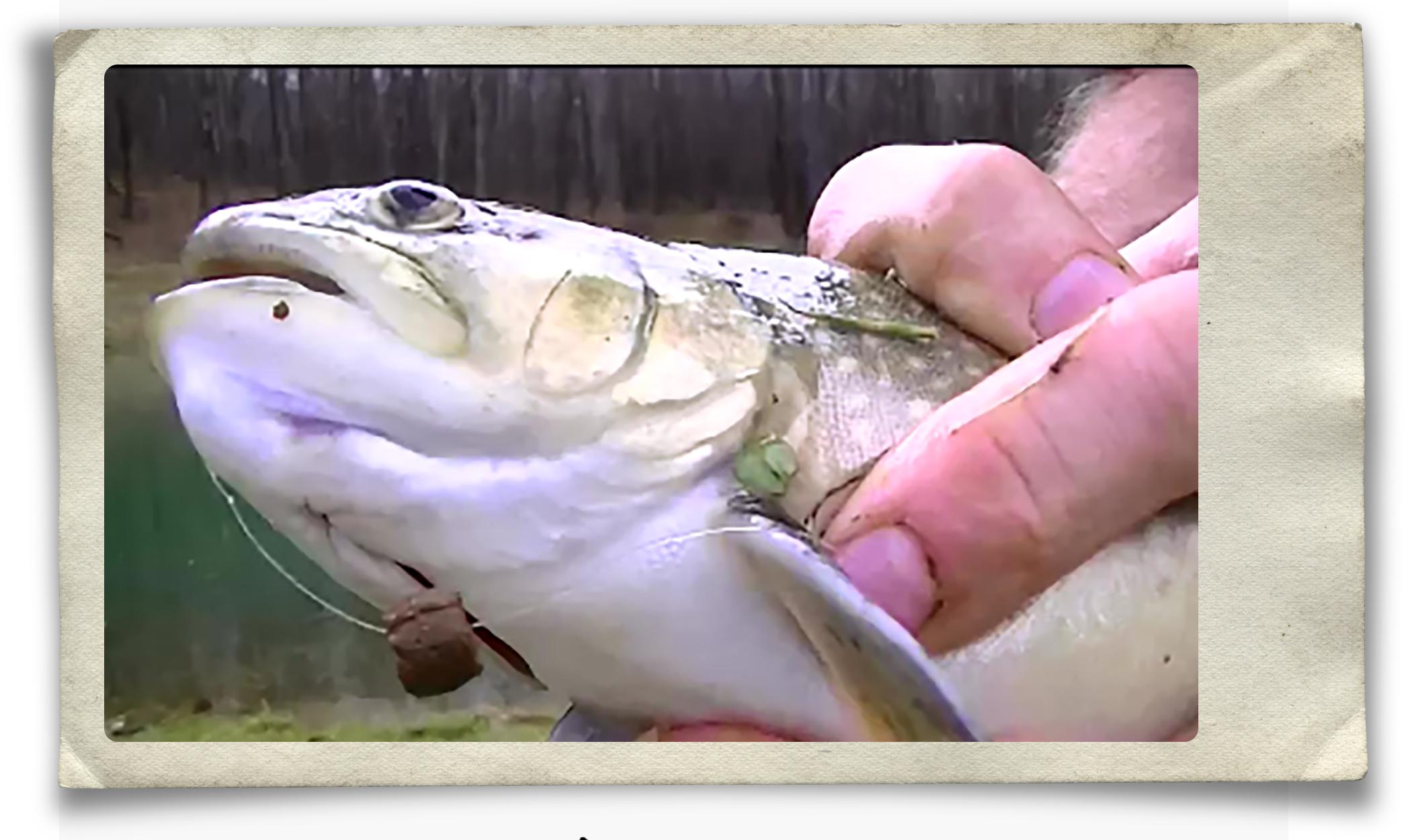 trout-with-brn-pellet.jpg