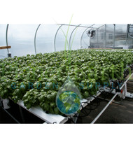 American Hydroponics Standard Commercial NFT Growing System 1152 Sites - Basil or Lettuce (AH93078HF)
