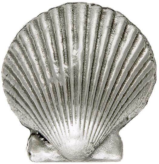 scalloped-seashell-baby.jpg