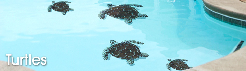 turtles-a5df118dc17d8d84ccf45d8864cc04a8.jpg