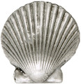 Scalloped Seashell Baby 1.75 inches
