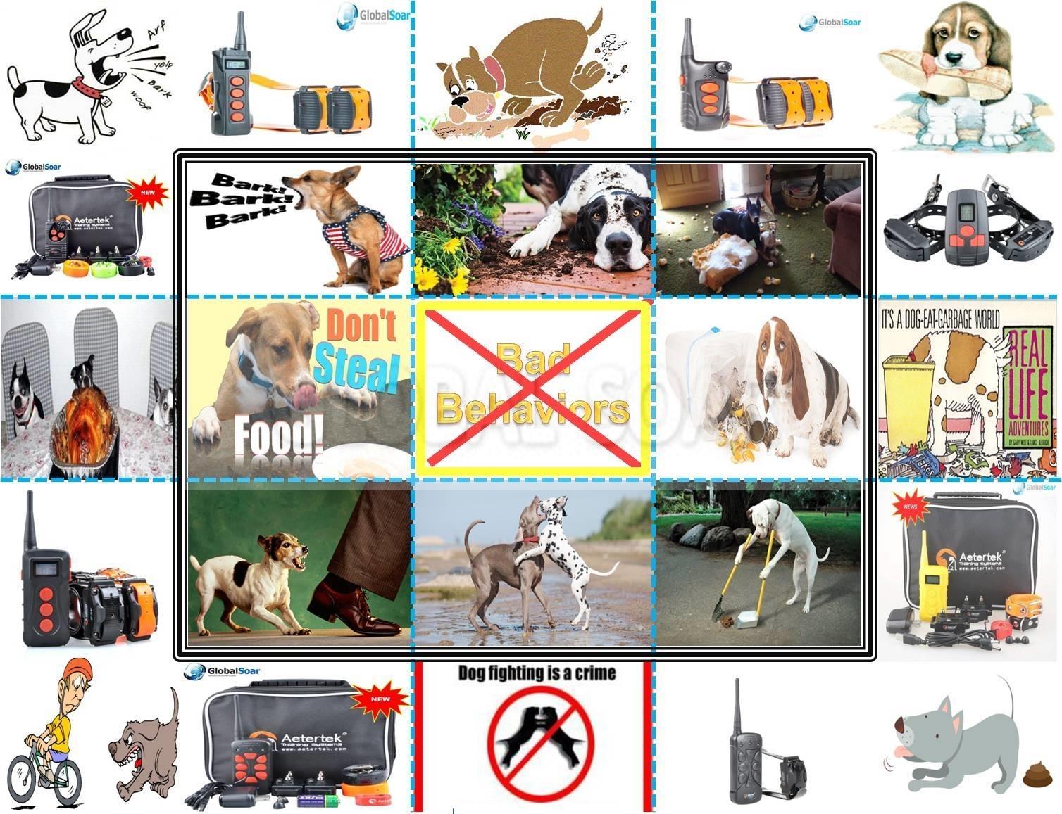 dog-ad1-1.jpg