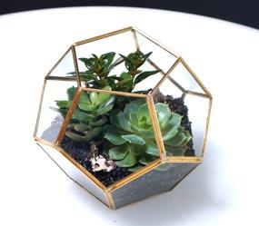 OCTO Succulent Terrarium