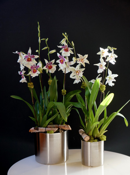 Double and Single Pot Options