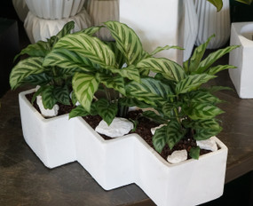 ZAG TROPICAL PLANTER
