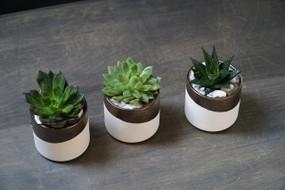 TRIO In BRONZE (Seasons Best Succulent Planter)