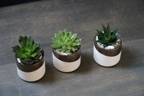 TRIO In BRONZE (Seasons Best Succulent Planter)