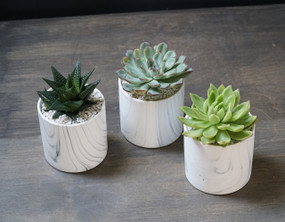 TRIO (Seasons Best Succulent Planter)