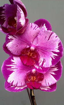 YEAR OF ORCHIDS